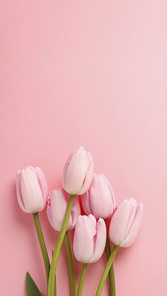 Easter Inspiration pink tulips at the bottom, on a pink background, spring wallpaper, phone wallpaper Frühling Wallpaper, Nature Iphone Wallpaper, Flower Phone Wallpaper, Trendy Wallpaper, Wallpaper Ideas, Pink Wallpaper Backgrounds, Animal Wallpaper, Good Iphone Backgrounds, Colorful Wallpaper