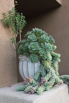Love this idea. Rustic pot and succulents.  Wonderfully put together