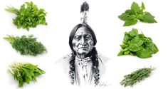 Geometric Decor, Native American Tribes, Natural Home Remedies, Geraniums, Flower Power, Cherokee, The Cure, Medical, Herbs