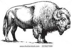 Find Buffalo American Bison stock images in HD and millions of other royalty-free stock photos, illustrations and vectors in the Shutterstock collection. Buffalo Animal, Buffalo Art, Bison Tattoo, Bison Logo, Buffalo Tattoo, Buffalo Painting, American Bison, Cowboy Art, Clipart Black And White