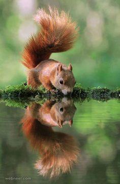 Beautiful squirrel wildlife photography by arena animation http://webneel.com/best-award-winning-wildlife-photography-inspiration | Design Inspiration http://webneel.com | Follow us www.pinterest.com/webneel