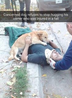 this is why dogs are better than humans