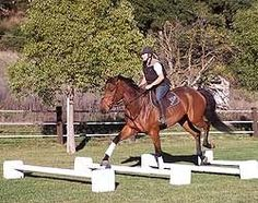 How to practice riding over cavaletti. Basic instruction. Also has links about building them.