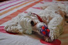 Playing time #yummypets #dog