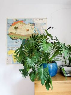 avant aprés la rénovation de notre chambre - Philodendron Xanadu Planter Pots, Indoor, Deco, Large Bedroom, Interior, Decor, Deko, Decorating, Decoration