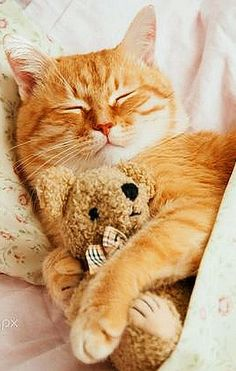 Cute red sleeping kitty cat on my bed #by Myra Lypa #kitten cats pet animal fluffy