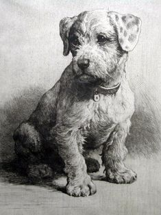 "This Piece named ""A Sealyham Pup (Un cachorro de Sealhyam terrier)"" drawn by Herbert Thomas Dicksee is a great example of Drypoint etching. Pencil Art Drawings, Animal Drawings, Illustrations, Illustration Art, Dog Portraits, Drawing Techniques, Dog Art, Painting & Drawing, Amazing Art"