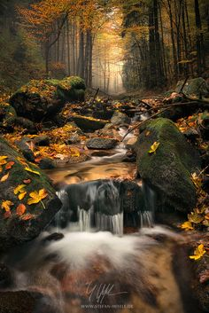 """Autumn Jungle - """"Autumn Jungle"""" - Carpathians - Slovakia  It's the details, the light and the seasons that make a forest so special."""