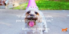 """""""If you obey all the rules, you will miss all the fun.""""   - Katharine Hepburn"""