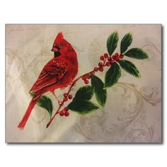 Cardinal in Holly Bush Cards -- Set of 160 sold
