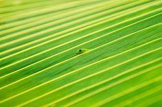 Is He Still There by Lorenzo Menendez: Gecko on Holualoa Big Island, Hawaii, nationalgeographic #Lorenzo_Menendez #nationalgeographic #Gecko #Photography #Hawaii #Big_Island