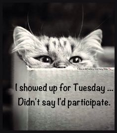 Sharing some crazy and hilarious funny Tuesday morning quotes, sayings, images, pictures and mor to tickle your funny bone to start your morning with. Tuesday Humor, Tuesday Quotes, Friday Humor, Cute Cats, Funny Cats, Funny Animals, Adorable Kittens, Crazy Cat Lady, Crazy Cats
