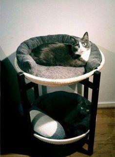 25 Warm And Cozy Cat Beds   Decorazilla Design Blog