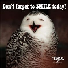 Be wise like Mr. Owl and don't forget to smile today! Most Beautiful Birds, Pretty Birds, Beautiful Smile, Dont Forget To Smile, Make You Smile, Don't Forget, Smile Captions For Instagram, Best Smile Quotes, Just For Today