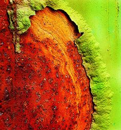 ⇜ Rust Lust ⇝ rusted metal with gorgeous patina - Lime green and rust Textures Patterns, Color Patterns, Foto Macro, Art Texture, Rust Never Sleeps, Fotografia Macro, Peeling Paint, Claude Monet, Color Inspiration