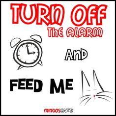 Turn Off The Alarm #cats #gatos #gatetes #catslovers #catlover #love #amor #meow #miau #alarm #feed