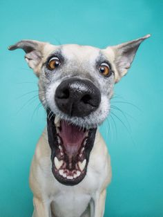 Expressive Dog Portraits by Elke Vogelsang Perfectly Capture Man's Best Friend Pet Dogs, Dogs And Puppies, Dog Cat, Doggies, Baby Puppies, Animals And Pets, Funny Animals, Cute Animals, Tier Fotos