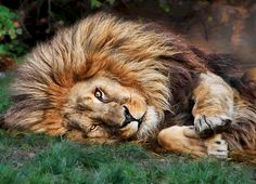 Lion; Let's cuddle! by Klaus Wiese on 500px