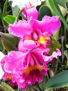 Flowers - Topluluk - Google+