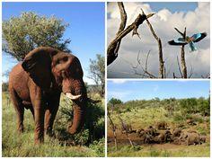 DayTreasure: Royal Madikwe - Madikwe Game Reserve Game Reserve, Elephant, Activities, Games, Animals, Travel, Animales, Animaux, Elephants