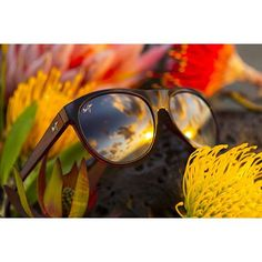 1c1667ceb88 Polarised Sunglasses for Men   Women. Maui Jim ...
