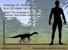 Facts and information about Panphagia and thousands of other prehistoric creatures. Thing 1, Prehistoric Creatures, Dinosaurs, Facts