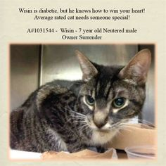 KILLED at ACC! Why??? :( TO BE DESTROYED 3/31/15 *NYC* CUTE KITTY! * Manhattan Center * Let Wisin into your life and he will make all your dreams come true. This beautiful 7 year old boy is in need of someone extra special, right now in his time of need. Wisin has been diagnosed with diabetes and needs someone with a big heart. *   My name is WISIN. My Animal ID # is A1031544. I am a neutered male blk tabby and white dom sh mix. I am about 7.   OWNER SUR on 03/28/2015 from NY 10457…