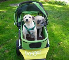 dog stroller - Never leave your leave your dog behind again with this adorable dog stroller. The Dogger incorporates innovation from the baby world to give dog ow. Large Dogs, Small Dogs, Dog Stroller, Dog Travel, Pet Costumes, Dog Boarding, Little Dogs, Dog Owners, Nice