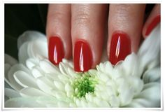 NOTD: More by Demy - Holly Red ~ By Dee make-up and more