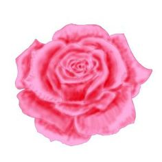 how to draw a rose shade in color