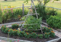 Tomato Trellises | The Masters of Horticulture