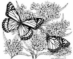 Northwoods Rubber Stamp Butterfly Weed w/ 2 Butterflies,$12.50