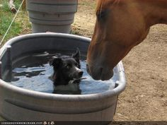 Reminds me of my best friend's dogs who always love to jump in the water trough :)