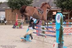 Equestrian: Jumping (if you can call it that..) ~ it looks like her horse refused one too many times and now she's just tossing him over