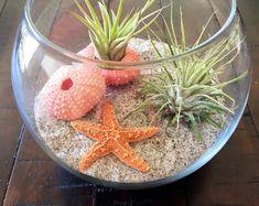 Air Plant Terrarium Beach Terrarium Glass by SimplyMAEdwithlove Terrarium Diy, Air Plant Terrarium, Glass Terrarium, Glass Vase, Arte Coral, Deco Marine, Air Plant Display, Plant Needs, Cactus Flower
