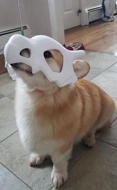 Not a single Cubone was harmed in the making of this mask! While Cubone wears the skull of its dead mother as a helmet, this mask is printed to give realistic tribute to the world's most lonely Pokemon. Cute Funny Animals, Cute Baby Animals, Animals And Pets, Cute Puppies, Cute Dogs, Big Dogs, Small Dogs, Pokemon Merchandise, Dog Mask
