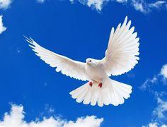 Ca ultim moment de spectacol, mă refugiez în lumea zburătoarelor libere și dau vârtos din aripi în timp ce interpretez o pasăre mare și albă care plutește în înălțimile abisului.