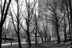 central park in march. black and white