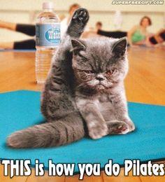haha  cat pilates