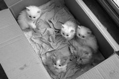 Baby Cats