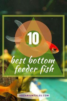 Aquarium Setup, Aquarium Ideas, Aquarium Design, Saltwater Fish Tanks, Saltwater Aquarium, Planted Aquarium, Tropical Aquarium, Tropical Fish, Cory Catfish