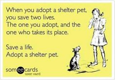 October is 'Adopt a Shelter Dog Month' - For the Love of the Dog