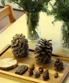 Preschool winter activities with evergreen trees from Fun A Day! #winter #preschool