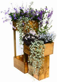http://www.journaldesfemmes.com/jardin/deco-jardin/1260171-jardin-caisse-vin/1269225-lobelia