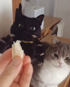 5 Adorable Cat Videos From Instagram