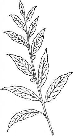 Pretty Berry Branch Line Art! - The Graphics Fairy Antique Illustration, Line Illustration, Botanical Illustration, Leaf Drawing, Floral Drawing, Botanical Drawings, Botanical Prints, Black And White Drawing, Black White