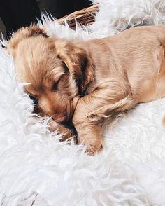 Save & repin! LeSalon mobile beauty in London www.lesalonapp.com #puppy #cute #dogs