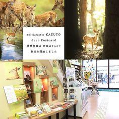 【kazuto.photography】さんのInstagramをピンしています。 《【 鹿のポストカードが啓林堂書店・奈良店さんにて販売開始しました 】  僕が撮影した鹿たちのポストカードが啓林堂書店・奈良店さんにて販売開始しました! よく目立つレジ横にて販売していただいておりますので、奈良にお越しの際はぜひ啓林堂書店・奈良店へ足をお運び頂けると嬉しいです!よろしくお願いいたします。 ・ ※全10種類・各1枚/300円 ・ 啓 林 堂 書 店 ・ 奈 良 店 住 所 / 奈良市西御門町1-1 ●営業時間/9:00~21:00 ●年中無休 ・ ※近鉄奈良線奈良駅4番出口より徒歩1分、小西さくら通り商店街の入口にあります。 ・ ※『 鹿のポストカード 』は他にも、 PhotoGardenさん・tuBUさんでも販売させて頂いております。 ・ ※『 猫のポストカード 』/ Veselさんで販売中! ・ ※『 羊のポストカード 』/ 神野山フォレストパークにある映山紅さんにて販売中!  #deer #鹿  #動物 #癒し #nara #奈良#Photo #写真 #癒し系 #若草山…