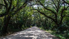 Canopy Road - Botany Bay WMA, Edisto Island, SC