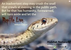 Snakes and lizards are often unsung heros in our habitats. Their presence helps keep rodent and insect populations in check. Our new planning tool (http://content.yardmap.org/learn/planning-tool/) provides you with ideas about how to support reptiles.   Our Learn pages also feature several articles discussing creating habitat for snakes and lizards. Head on over to Habitat Network to learn more: http://content.yardmap.org/learn/?s=reptile&post_type=learn